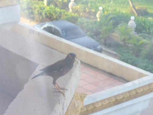 部屋にやってきた鳥